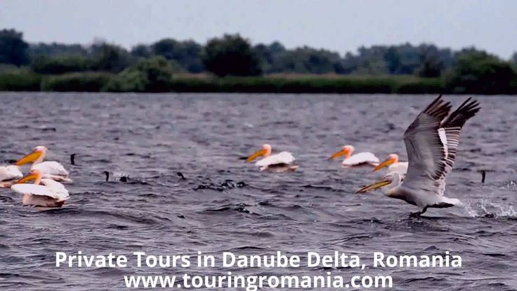 Day Trip in Danube Delta - Private Tour by Touring Romania (www.touringr...
