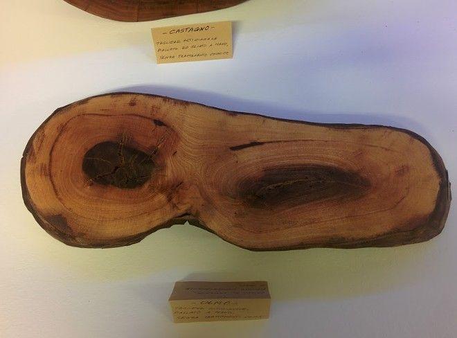 Tagliere in legno rustico (ceppo Olmo)