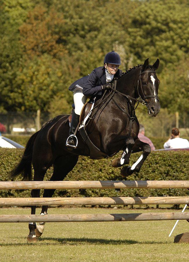 show jumping horse   michael huggan photography
