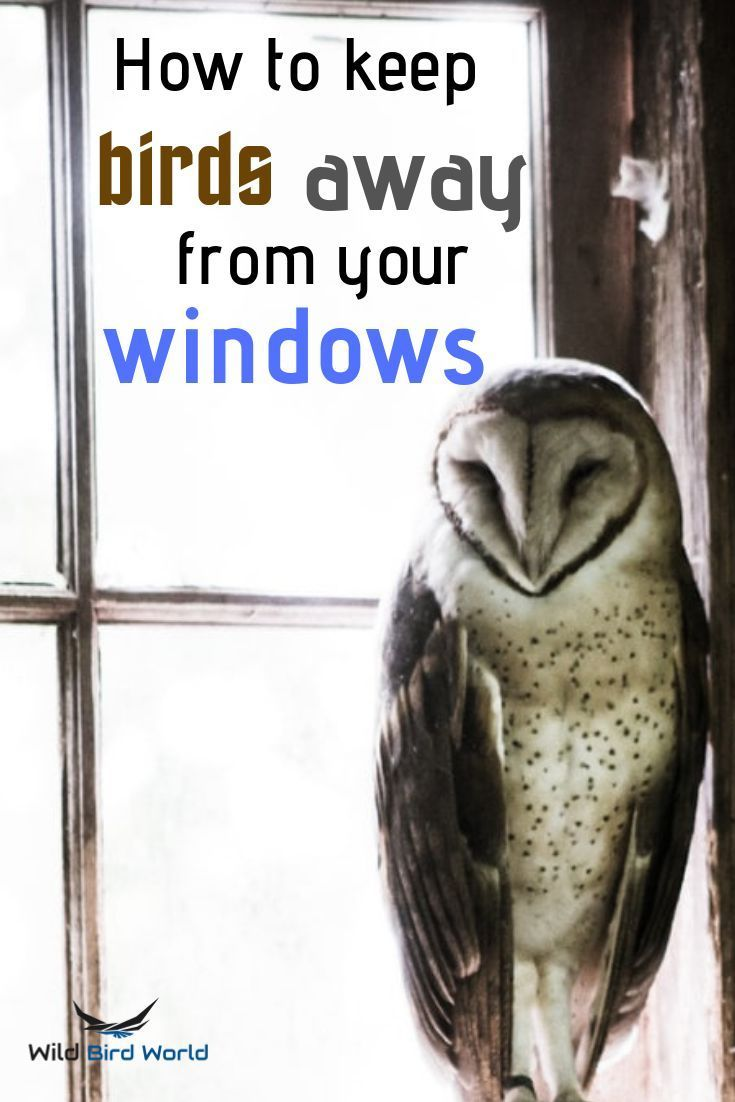 How To Stop Birds From Flying Into Your Windows In 2020 With Images Keep Birds Away Birds Attract Wild Birds