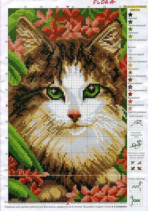 Мобильный LiveInternet Кот в синих и красных цветах... | тануля - Дневник тануля |