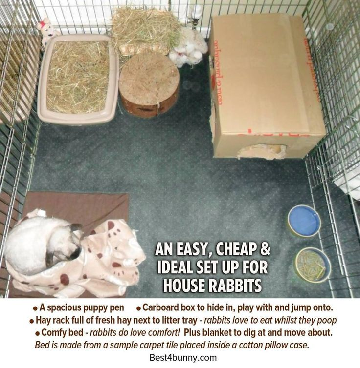 Basic Indoor Bunny Setup Bunny Cages Diy Bunny Cage