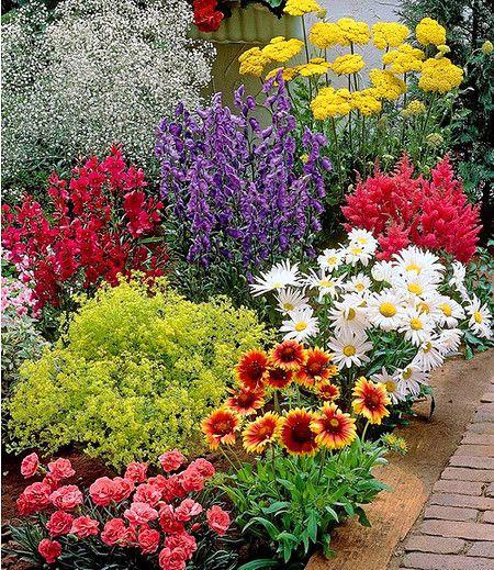 Bunter Staudengarten,9 Pflanzen | Produkte Blumenbeet Anlegen Teppichbeet Tipps