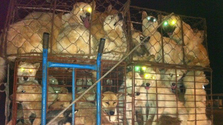 This is Japanese translation petition for petition -Honorary Ambassador Yuna Kim: Speak for the Korean animals at the PyeongChang 2018 Olympic Games! https://www.change.org/p/yuna-kim-honorary-ambassador-yuna-kim-speak-for-the-korean-animals-at-the-pyeongchang-2018      キム・ヨナ名誉大使 !! ピョンチャン2018冬季オリンピックを機に...