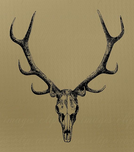 Skull Clip Art with antlers Royalty Free No by ImagesClipArt