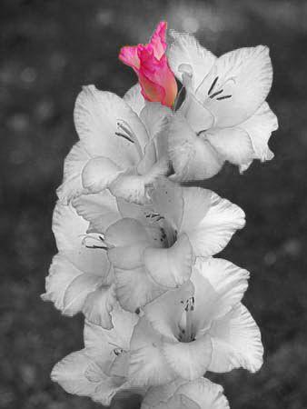 1 unbloomed flower