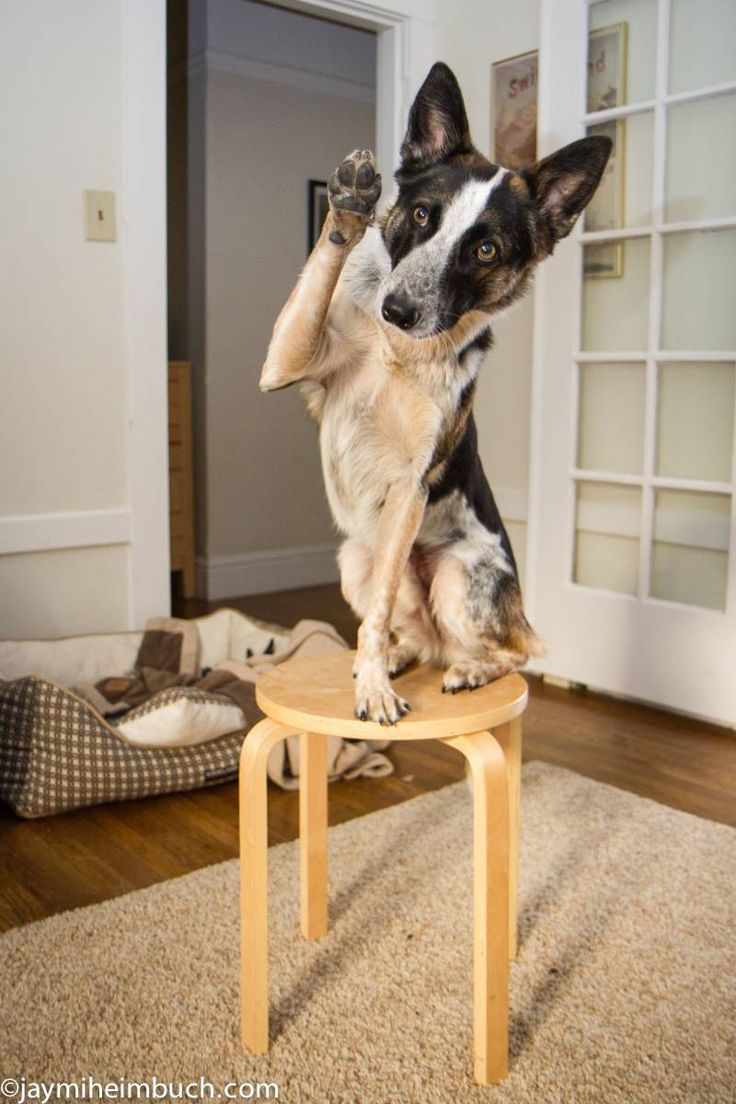 There are some amazing games your dog has to figure out the puzzle to find the treat. A few dog was trained for short-term, supervised entertainment.