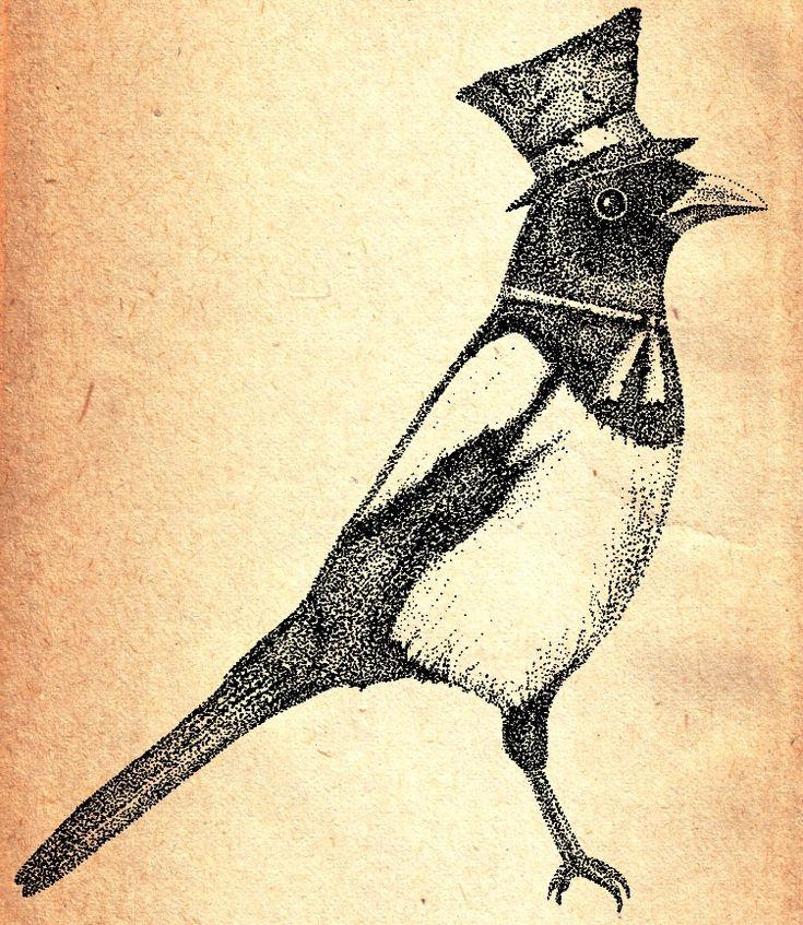 gentleman magpie