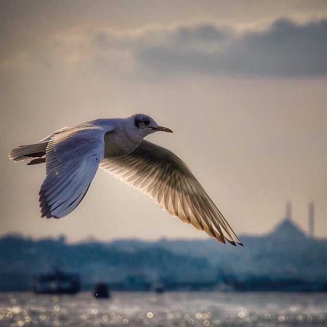 But what really makes Istanbul the most Instagrammable city on the planet is its residents. Like this guy.
