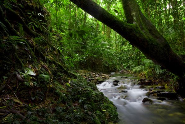The World Heritage-listed rainforests surrounds Cairns in all directions and can be easily accessed and experienced in many ways. Join one of the many. #rainforests #cairns
