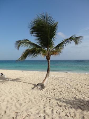 Majestic Colonial Punta Cana: Wonderful beach