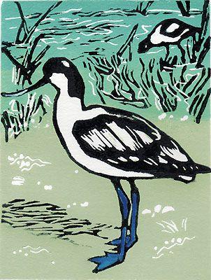 North Norfolk Avocet