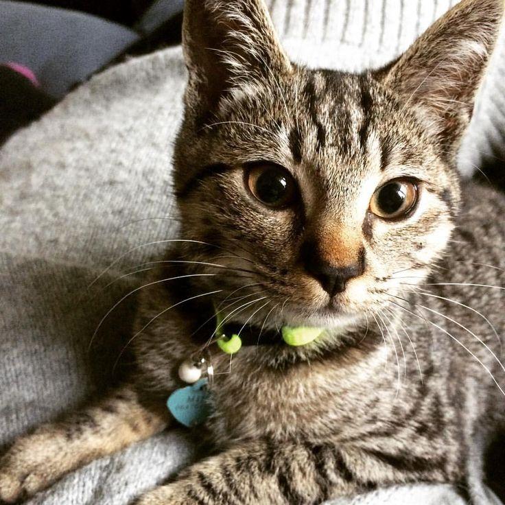 Milo  Cat | Pawshake Amsterdam