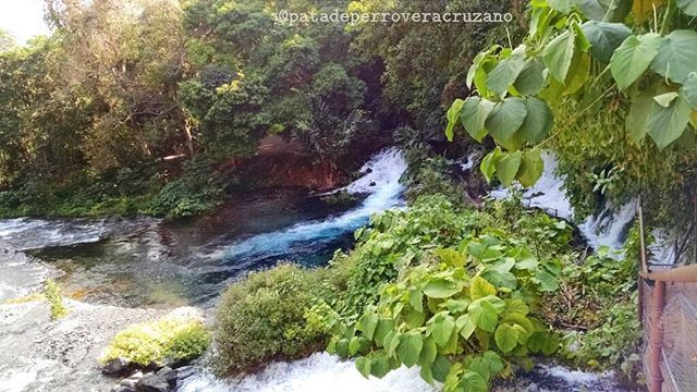 "Reserva Ecológica Nace el Río ""Descabezadero"". Ubicada sobre la Carretera Xalapa-Actopan Km 30, Localidad de Chicuasén, Municipio de Actopan, Estado de Veracruz. by patadeperroveracruzano. viagemeturismo #turisim #turismo #туризм #sancharaya #туризам #travelgram #tūrisms #idegenforgalom #туризъм #tourismus #turasóireachtaa #torismo #torism #travel #turystyka #tourism #turismu #torisme #turizm #pariwisata #turrysaght #instatravel #touristelezh #utalii #tferðaþjónustu #turisme #turizam #turism"
