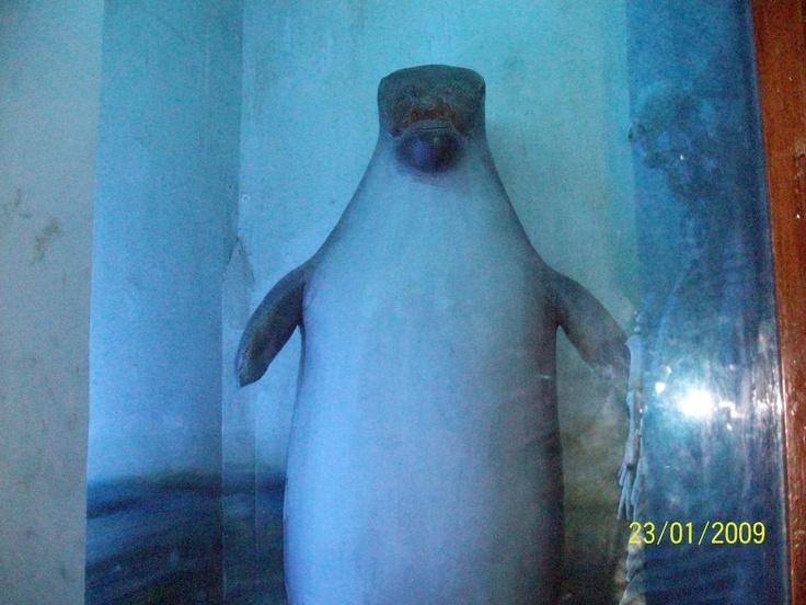 106 best Future Marine Biologist images on Pinterest Fishing - marine biologist job description