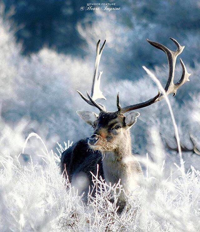 398 besten winter wald bilder auf pinterest wald winter. Black Bedroom Furniture Sets. Home Design Ideas