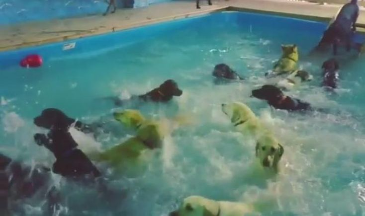 A bit of distraction today! These Massive Doggy Pool Parties Will Make Your Day>