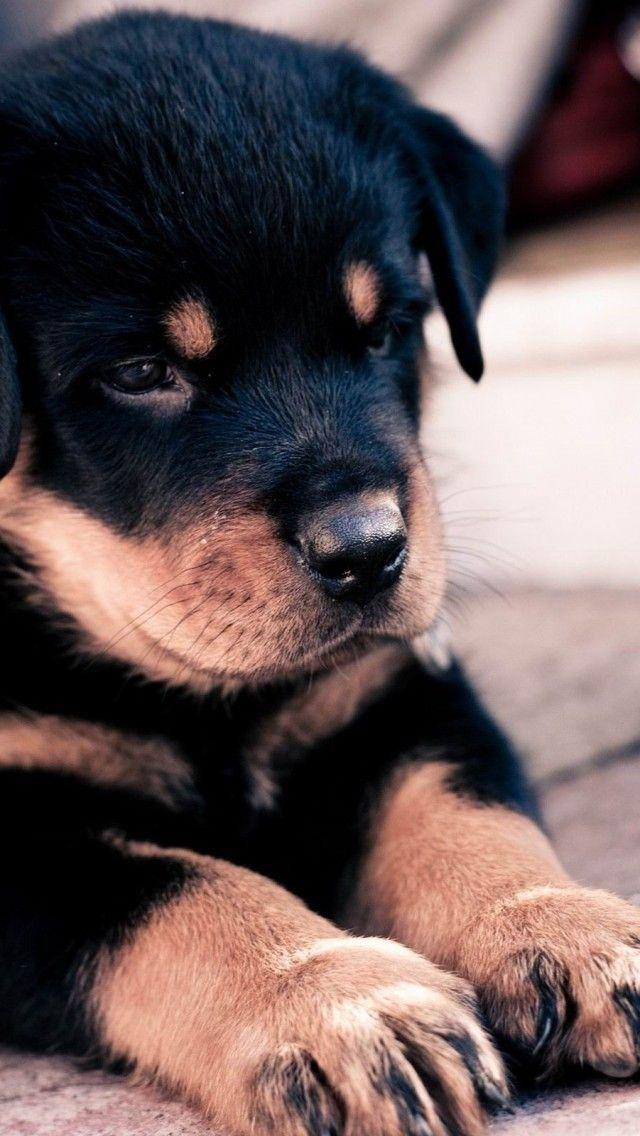 Tengo que caminar al perro. No tengo un perro pero si tenía uno, yo tendría que hacer esto.