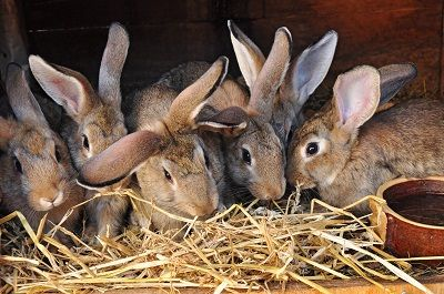 pointers on raising rabbits Search rabbits - view pictures, and read profiles of rabbits for adoption near you.