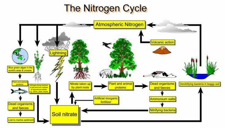 Nitrogen Cycle Diagram To Label Inspirational Nitrogen Cycle In 2020 Nitrogen Cycle Organic Gardening Tips Organic Vegetable Garden