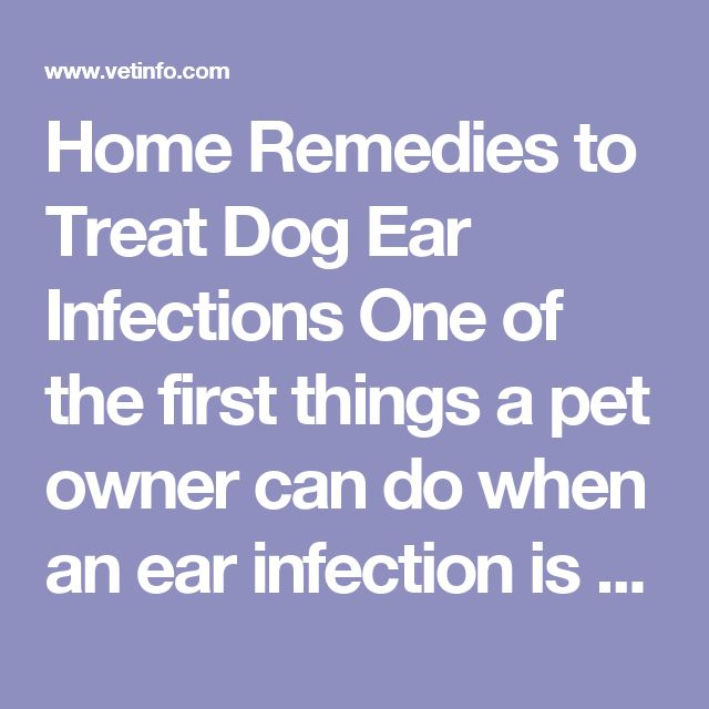 Clean Dog Ear Infection Home Remedy