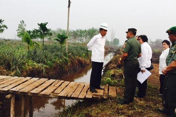 Tangani Lahan Gambut Ini Saran UGM untuk Jokowi : Kelompok Kerja Gambut Universitas Gadjah Mada (UGM) Yogyakarta memberi masukan kepada Presiden Joko Widodo (Jokowi) mengenai penanganan gambut khususnya kebakaran lahan