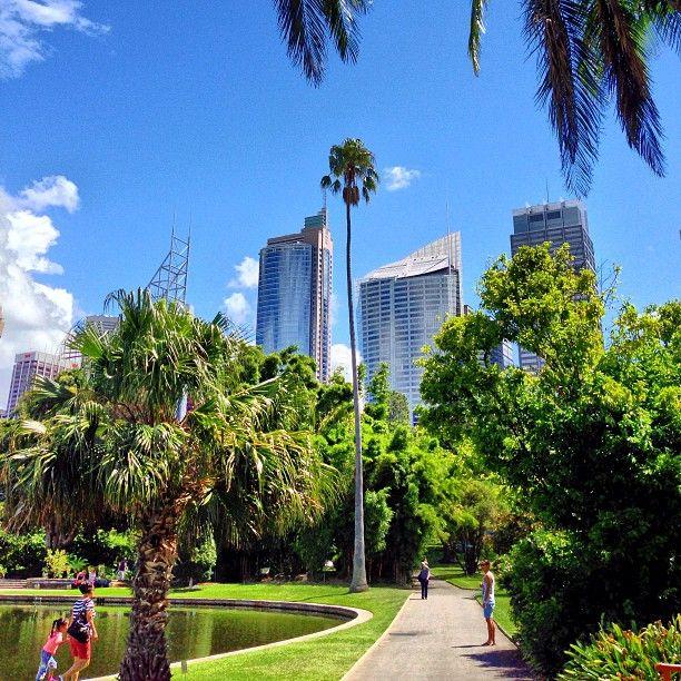 Autumn in the Botanical Gardens #Sydney #Australia     by leo_stone (instagram)