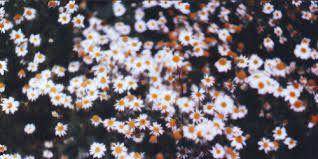 Resultado de imagen para hipster floral background