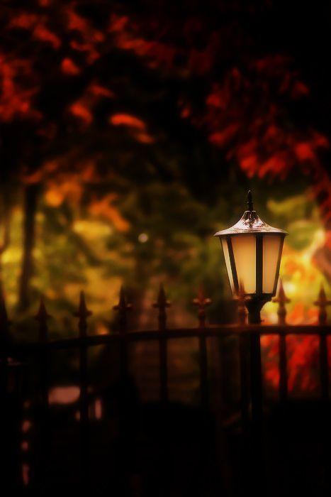 autumn | The Sleepy Hallow: Autumn Halloween Thanksgiving, Halloween Autumn, Color Fall, Autumn Fall Halloween, Posts, Autumn Twilight