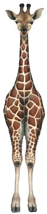so TALL  - Giraffe! <3