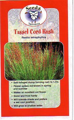 Baloskion tetraphyllum syn Restio tetraphyllus • Australian Native Plants Nursery • Plants • 800.701.6517