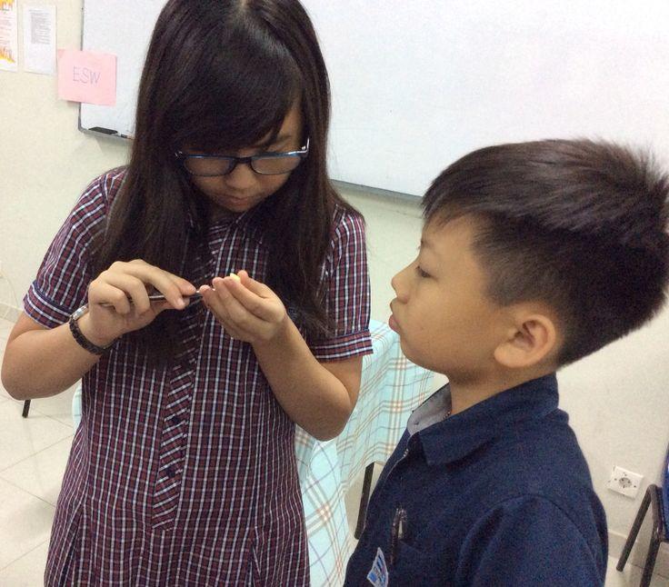 Preparing the onion cell specimen.