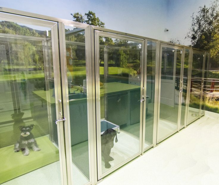 Glass Kennel Cage Front Designs For Dogs Perfect For