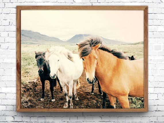 Horses Art Print, Horse Poster, Horse Photography, Animal Portrait, Animal Art Print, Animal Prints, Animal Poster, Horse Wall Art, Horses