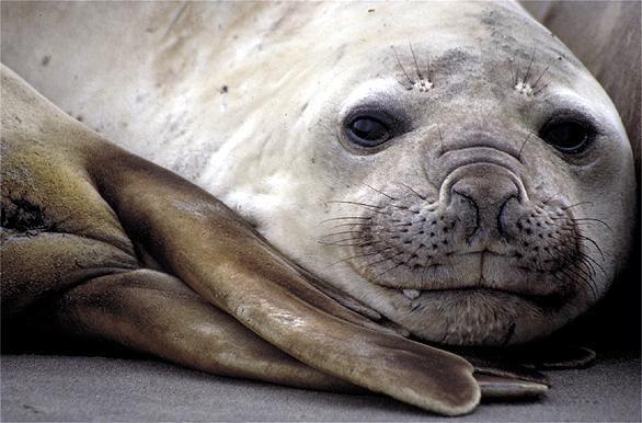 Puerto Madryn,ballenas, delfines, leones marinos, elefantes marinos y más!