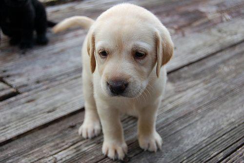doggie.
