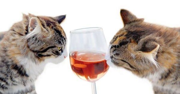 There's a wine for cats (seriously) | MNN - Mother Nature Network