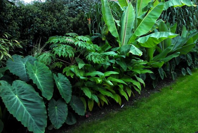 tropical border....See several items that love our Louisiana summers and survive practically all winters in the ground