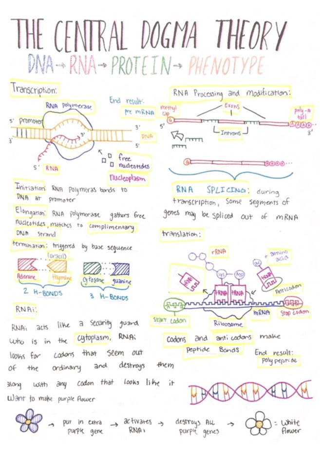best 25 dna synthesis ideas on pinterest transcription and translation genetics and ap biology. Black Bedroom Furniture Sets. Home Design Ideas