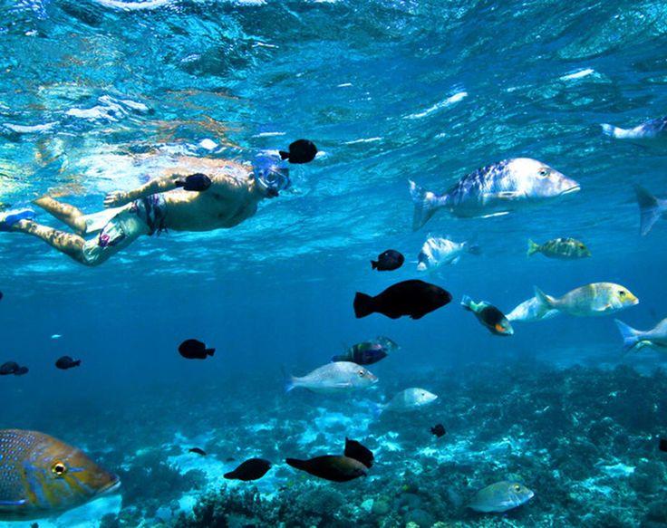 The Coral Coast/Travel Australia