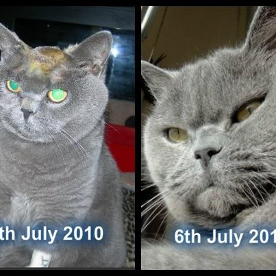 The amazing Miss Kitty recovering from Surgery to remove a brain tumor & today :) - going as strong as ever :)