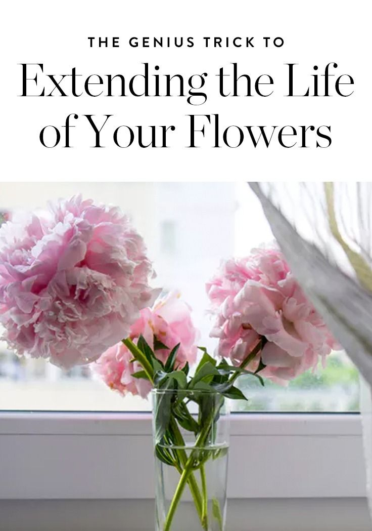 There's nothing like a vase of feathery peonies to brighten up a room. Here's the genius trick to extend the life of your favorite flowers.