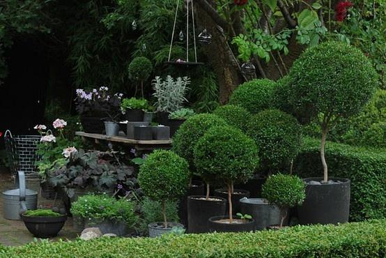 17 Best Images About Landscape Deck Plants On Pinterest
