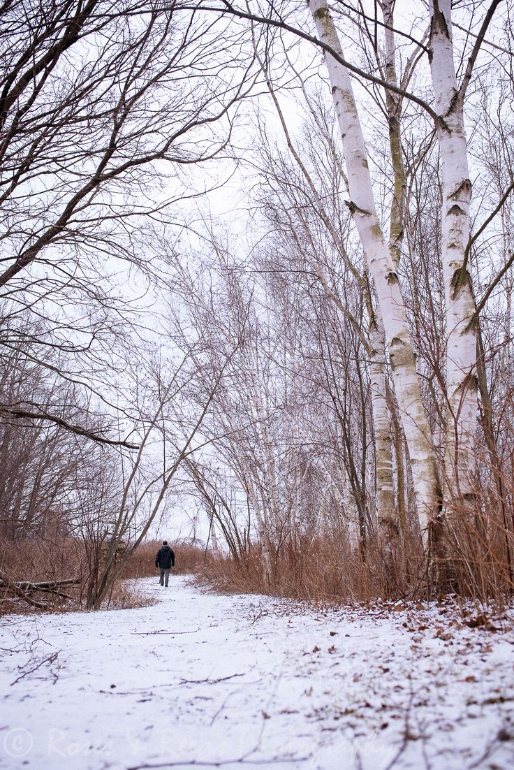 Winter walks & a birch forest = perfection. Playing with perspective.