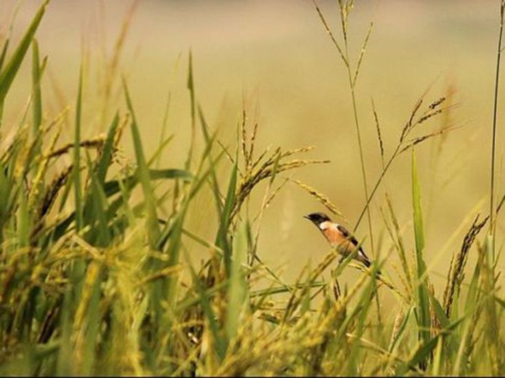 Bird Sanctuaries in Bihar, India @ Sanctuariesindia.com