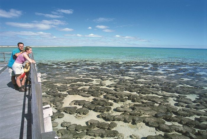 Step back in time at the Stromatolites on the 4 Day Monkey Mia Tour