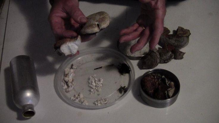 Funghi e Bushcraft (1/2): Poliporo e Lapacendro - Uso consumo e riferime...