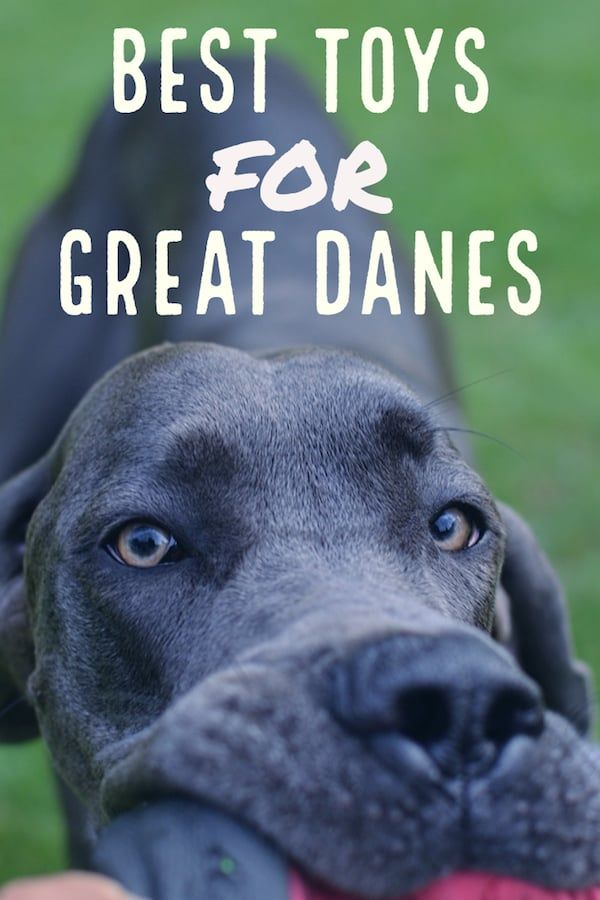 Pin By Amber Adams On For My Home 2020 Great Dane Best Dog
