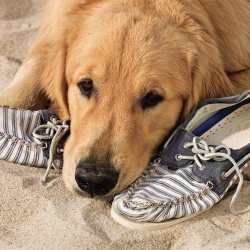 Les chaussures bateau Sperry / Sperry boat shoes | À la mode Montréal #montreal #fashion #shoes #ocean #water