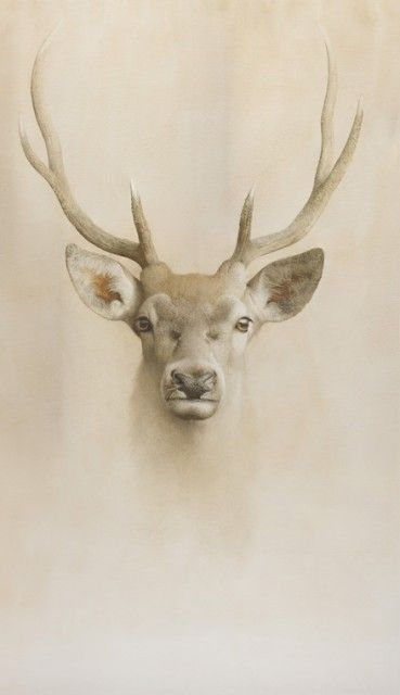 Marzio Tamer | WATERCOLOR | Young Deer